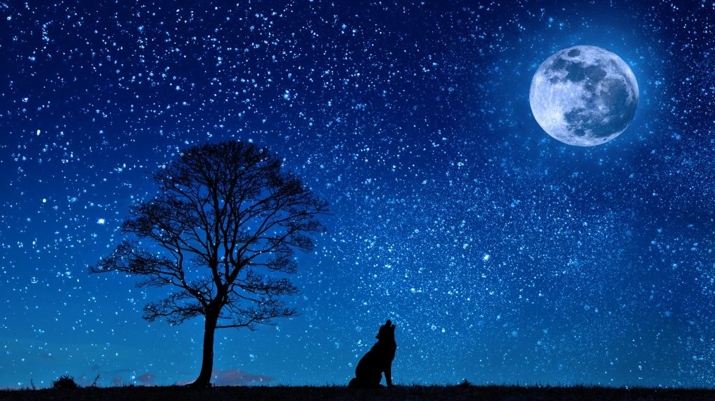 dog-howling-night-sky