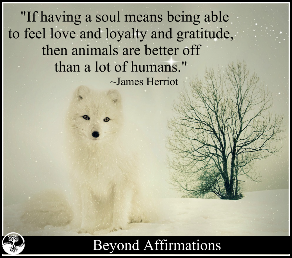 soul-love-James Herriot-animals-humans